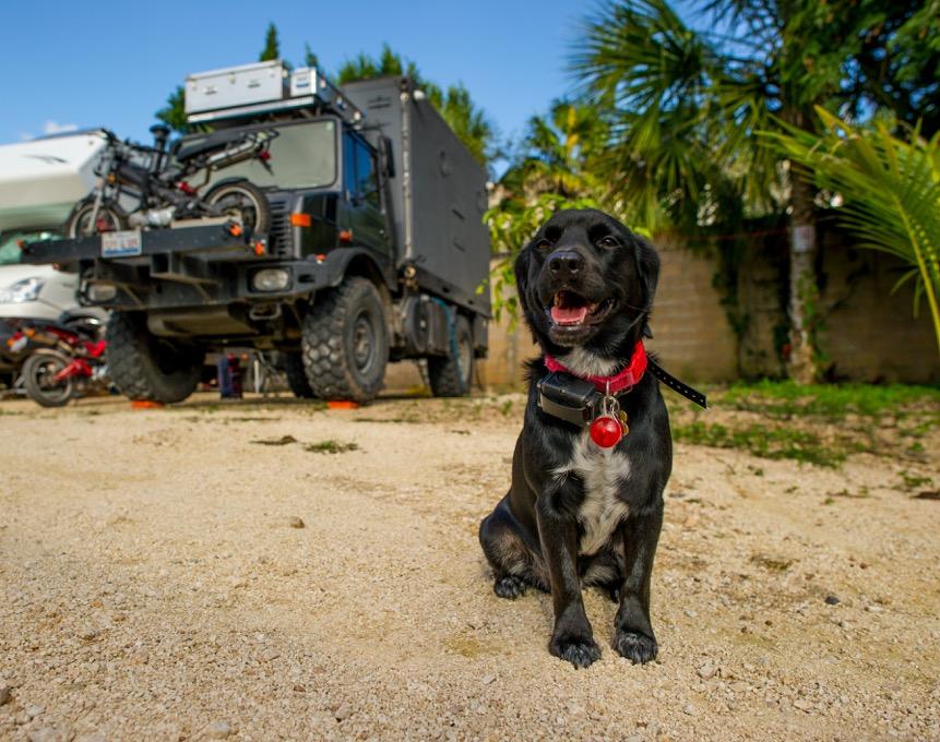 Bringing a dog to Belize